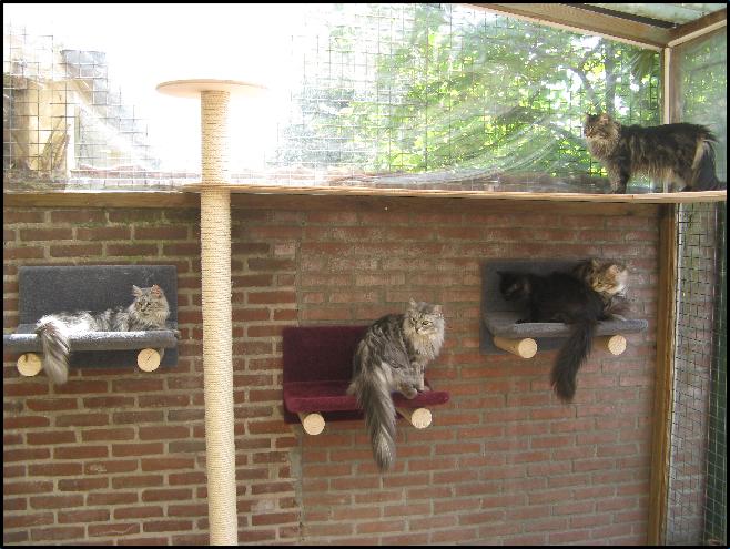 Katten meubels